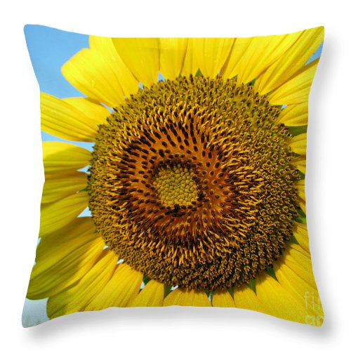 Sunflower Throw Pillow featuring the photograph Sunflower Series by Amanda Barcon
