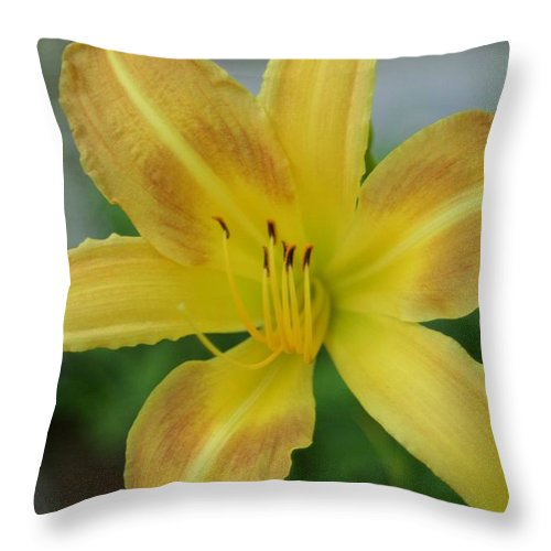 Photography Throw Pillow featuring the photograph Sunny Start by Barbara S Nickerson