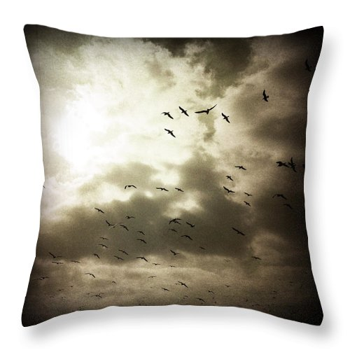 Gulls Throw Pillow featuring the photograph Gulls by David Chatterton