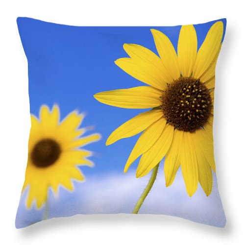 Chad Dutson Throw Pillow featuring the photograph Sunshine by Chad Dutson