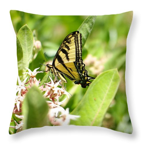 Antennas Throw Pillow featuring the photograph Swallowtail by Jeff Swan
