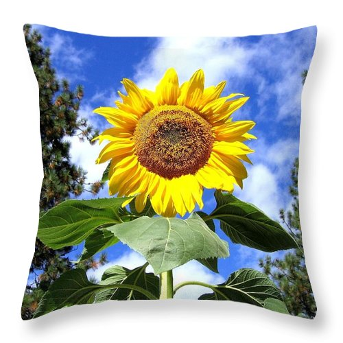Sunflower Throw Pillow featuring the photograph Tall And Sunny by Will Borden