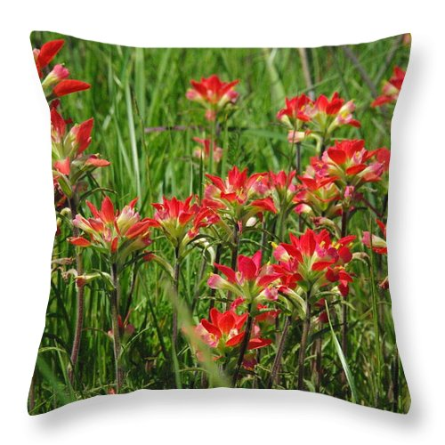 Wildflower Throw Pillow featuring the photograph Texas Paintbrush by Robyn Stacey