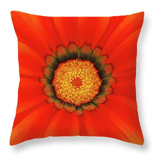 Daisy Throw Pillow featuring the photograph The Beauty Of Orange by Lori Tambakis