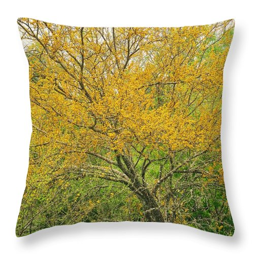 Leaning Throw Pillow featuring the photograph The Leaning Tree by Gary Richards