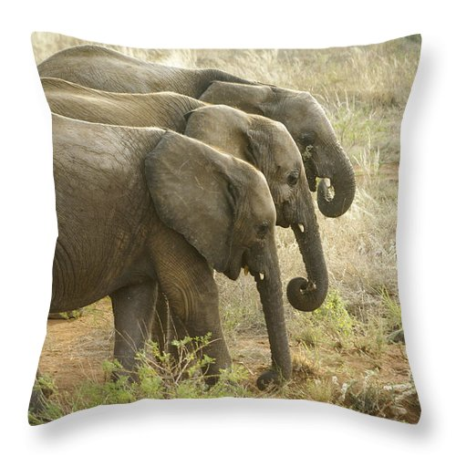 Africa Throw Pillow featuring the photograph Three In A Row by Michele Burgess