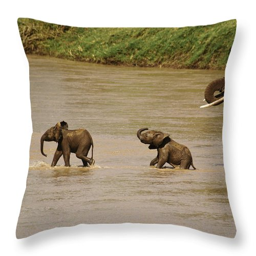 Africa Throw Pillow featuring the photograph Tiny Elephants by Michele Burgess