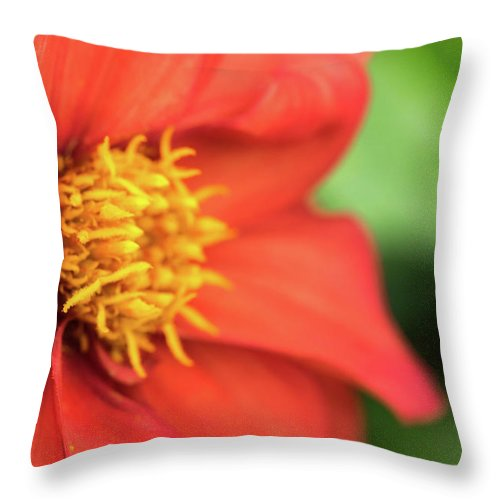 Beauty Throw Pillow featuring the photograph Tithonia Rotundifolia, Red Flower by Wael Alreweie