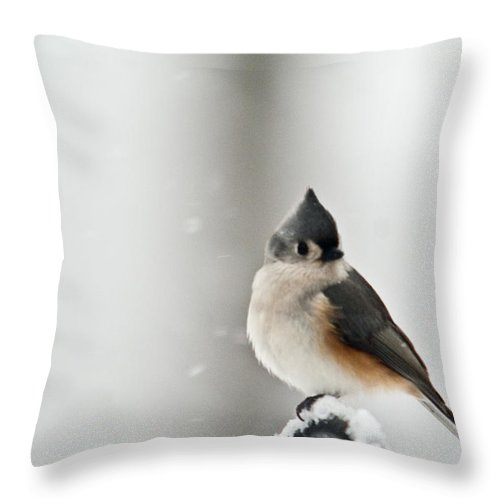 Tufted Throw Pillow featuring the photograph Titmouse In The Snow by Douglas Barnett