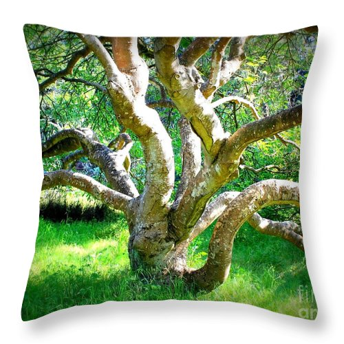 Photography Throw Pillow featuring the photograph Tree In Golden Gate Park by Carol Groenen