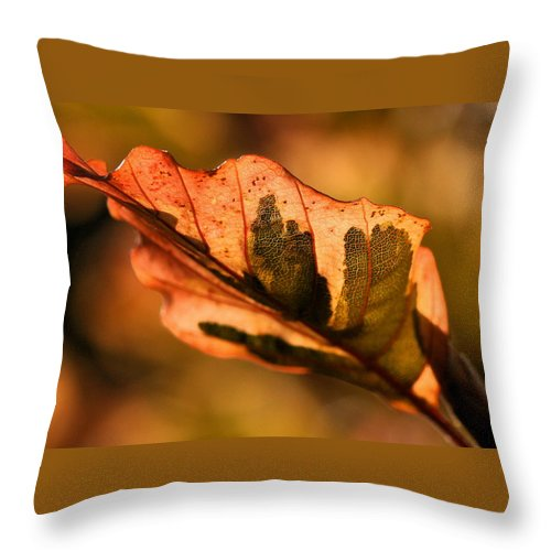 Fall Throw Pillow featuring the photograph Tri-color Beech In Autumn by Angela Rath