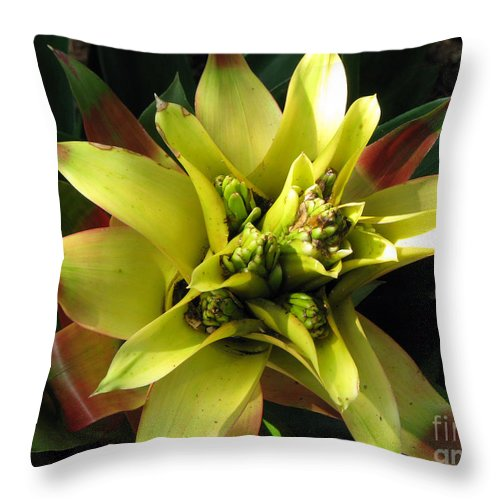 Tropical Throw Pillow featuring the photograph Tropical by Amanda Barcon