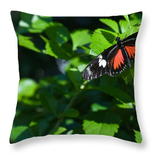 Tropical Throw Pillow featuring the photograph Tropical Butterfly by Douglas Barnett