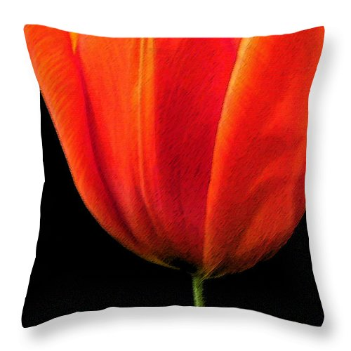 Tulips Throw Pillow featuring the photograph Tulip by Amanda Barcon
