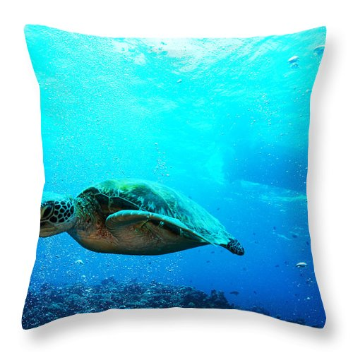 Sea Life Throw Pillow featuring the photograph Turtle Cove by Mumbles and Grumbles