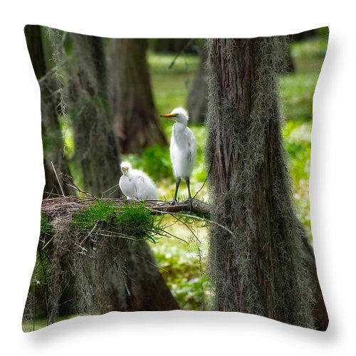 Bird Throw Pillow featuring the photograph Two Baby Great Egrets And Nest by Rich Leighton