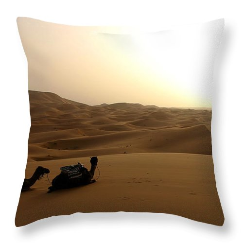 Camel Throw Pillow featuring the photograph Two Camels At Sunset In The Desert by Ralph A Ledergerber-Photography