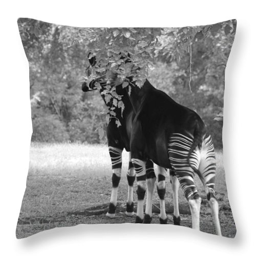 Animal Throw Pillow featuring the photograph Two Stripers by Rob Hans