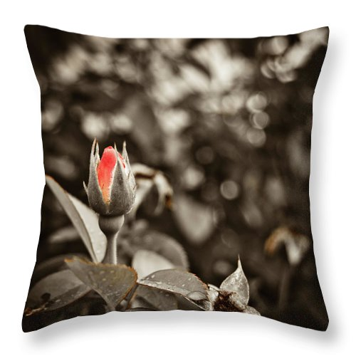 Rose Throw Pillow featuring the photograph Vintage Rose by Amber Flowers
