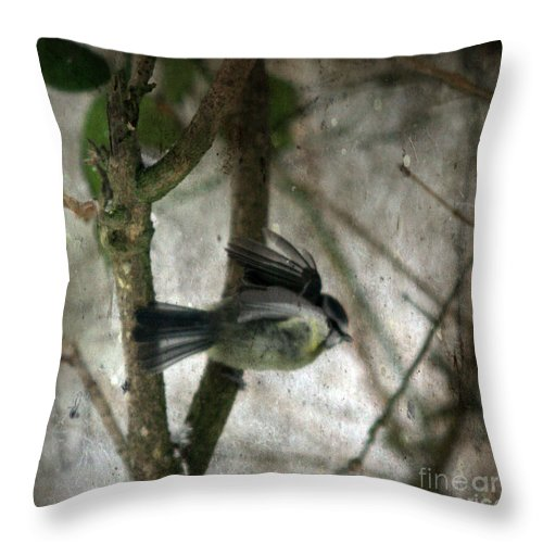Blue Tit Throw Pillow featuring the photograph Waiting For Spring by Angel Ciesniarska