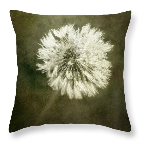 Dandelion Flower Throw Pillow featuring the photograph Water Drops On Dandelion Flower by Scott Norris