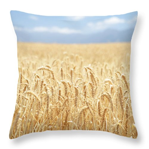 Wheat Throw Pillow featuring the photograph Wheat Field by Neil Overy