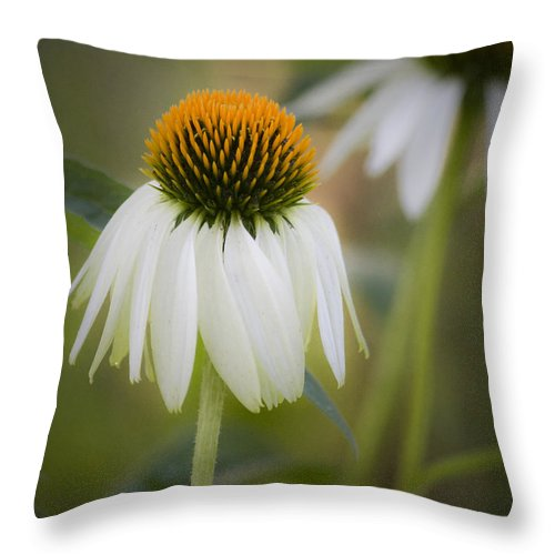 Coneflower Throw Pillow featuring the photograph White Coneflower by Teresa Mucha