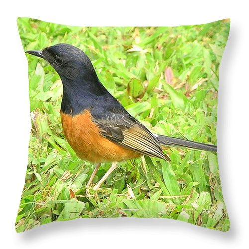 Black Throw Pillow featuring the photograph White-rumped Shama by Mary Deal
