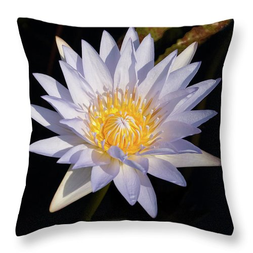 Water Lily Throw Pillow featuring the photograph White Water Lily by Steve Stuller