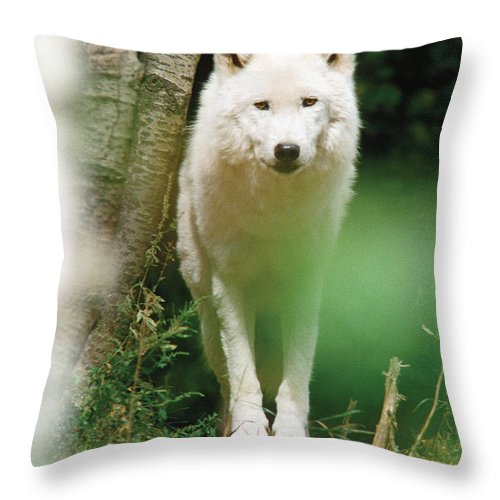 Wolf Throw Pillow featuring the photograph White Wolf Stare by Steve Somerville