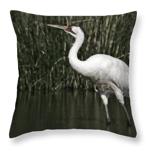 Whooping Throw Pillow featuring the photograph Whooping Crane by Al Mueller