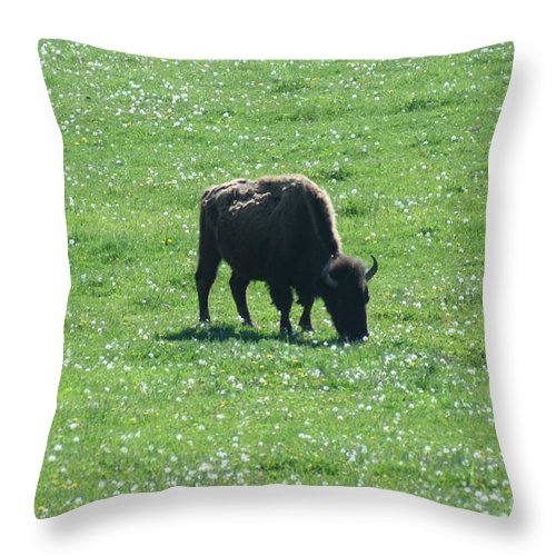 Wisconsin Throw Pillow featuring the photograph Wisconsin Buffalo by Tommy Anderson