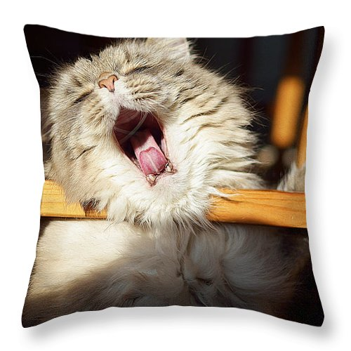 Cat Art Throw Pillow featuring the painting Yawning Cat by Queso Espinosa