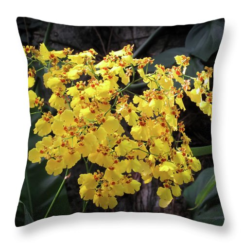Orchid Throw Pillow featuring the photograph Yellow Orchids by Zina Stromberg
