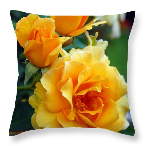 Flower Throw Pillow featuring the photograph Yellow Roses by Amy Fose