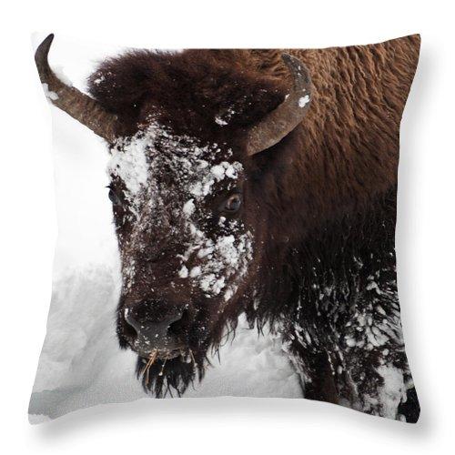 Yellowstone Throw Pillow featuring the photograph Yellowstone Buffalo by Doug Davidson
