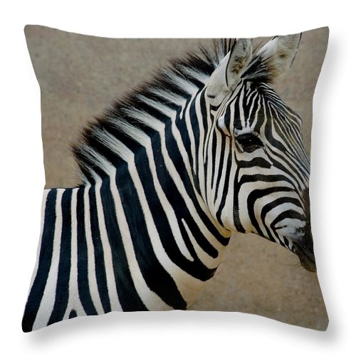 Animals Throw Pillow featuring the photograph Zebra by D Nigon