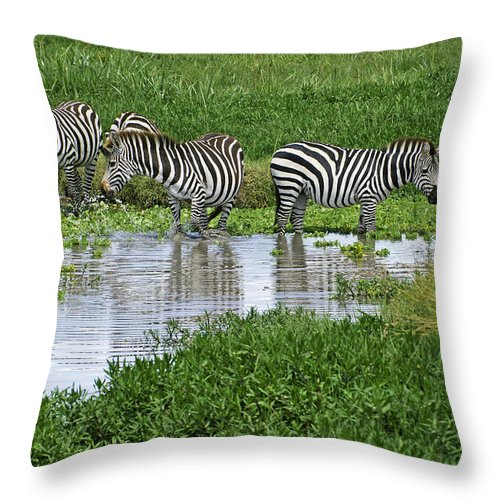 Africa Throw Pillow featuring the photograph Zebras In The Swamp by Michele Burgess