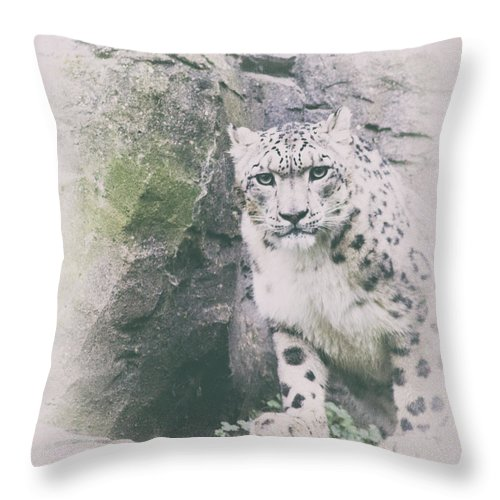 Leopard Throw Pillow featuring the photograph Snow Leopard 10 by Martin Newman