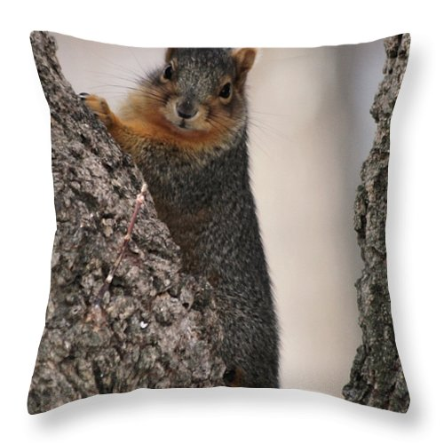 Squirrel Throw Pillow featuring the photograph Squirrel by Lori Tordsen