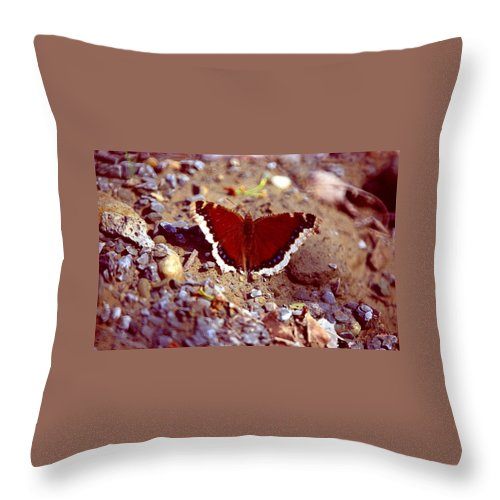 Butterfly Throw Pillow featuring the photograph 113093-1 by Mike Davis