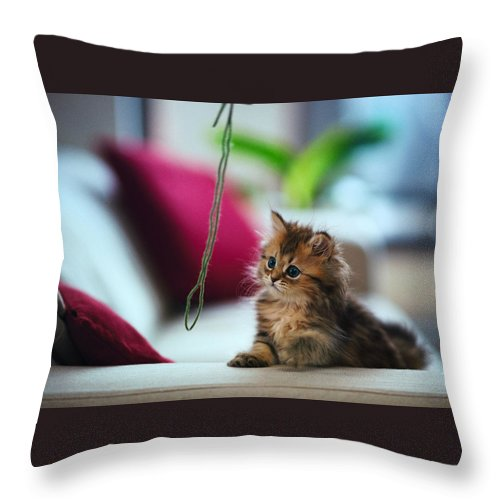 Cat Throw Pillow featuring the digital art Cat by Dorothy Binder