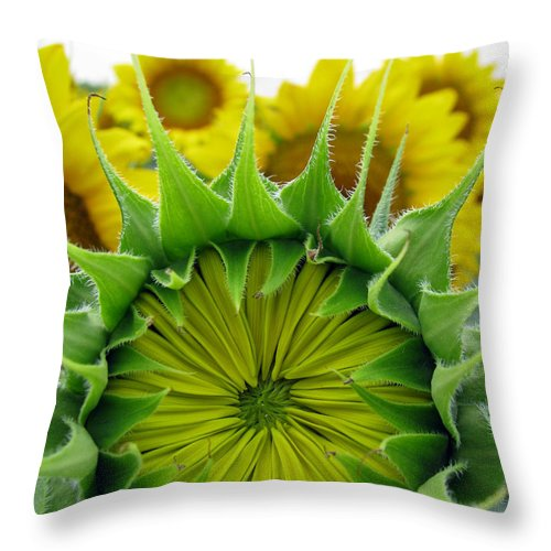 Sunflwoers Throw Pillow featuring the photograph Sunflower Series by Amanda Barcon