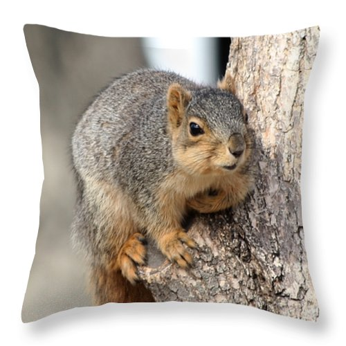 Squirrels Throw Pillow featuring the photograph Squirrel by Lori Tordsen
