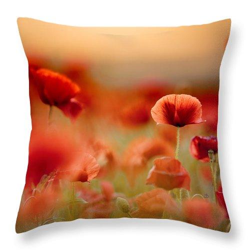 Poppy Throw Pillow featuring the photograph Poppy Dream by Nailia Schwarz