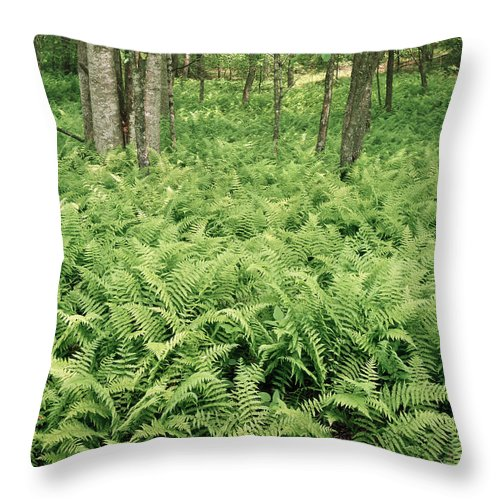 Ferns Throw Pillow featuring the photograph 146112 Ferns In Pisgah Nat Forest V by Ed Cooper Photography