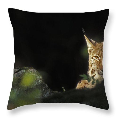 Eurasian Lynx Throw Pillow featuring the photograph 151001p105 by Arterra Picture Library