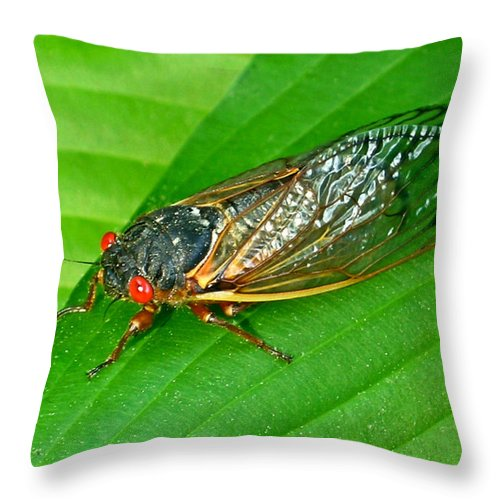 17 Throw Pillow featuring the photograph 17 Year Periodical Cicada by Douglas Barnett