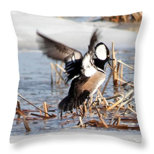 Hodded Throw Pillow featuring the photograph Hooded Merganser by Lori Tordsen