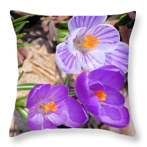 Digital Photography Throw Pillow featuring the photograph 1st Flower In Garden 2010 Photo by David Lane